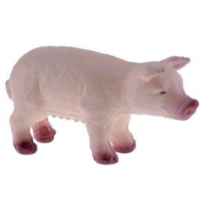 Pig Medium